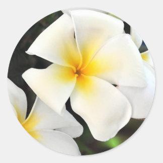 Tropical Plumeria Flower Sticker