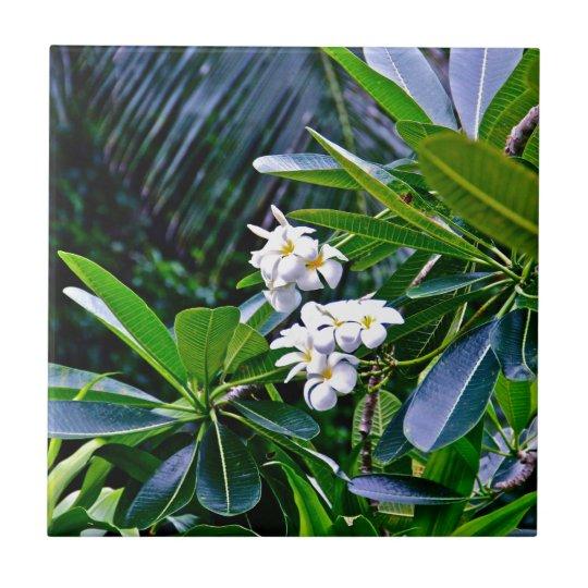 Tropical Plumeria Flowers Small Square Tile