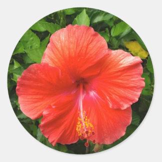 Tropical Red Hibiscus Bonita Springs Florida Round Sticker