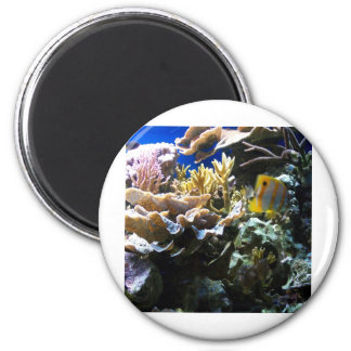 Tropical Reef 2 6 Cm Round Magnet