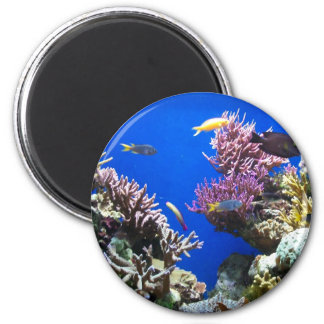 Tropical Reef 6 Cm Round Magnet