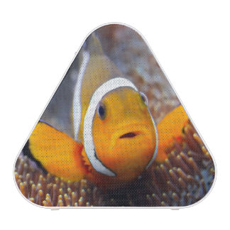 Tropical reef fish - Clownfish