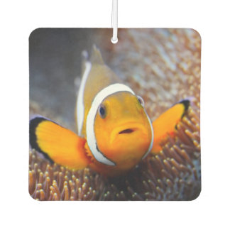 Tropical reef fish - Clownfish Car Air Freshener