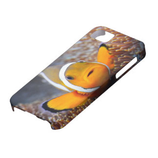 Tropical reef fish - Clownfish Case For The iPhone 5