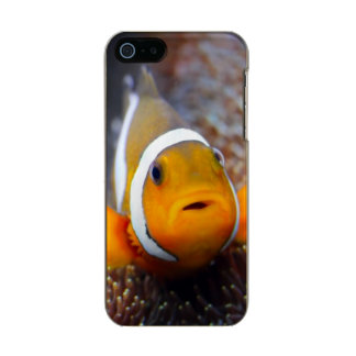 Tropical reef fish - Clownfish Incipio Feather® Shine iPhone 5 Case