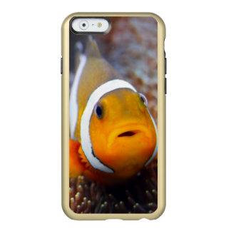 Tropical reef fish - Clownfish Incipio Feather® Shine iPhone 6 Case