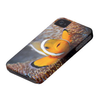 Tropical reef fish - Clownfish iPhone 4 Cases