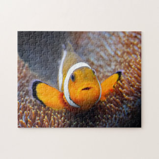 Tropical reef fish - Clownfish Jigsaw Puzzle