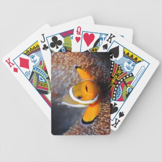 Tropical reef fish - Clownfish Poker Deck