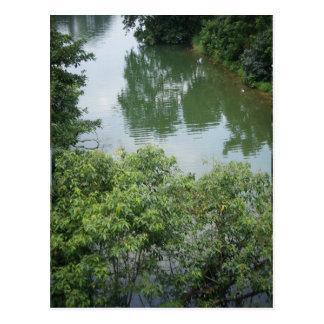 Tropical River Scene Postcard