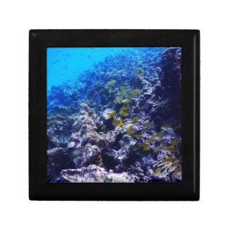 Tropical Sealife Gift Box