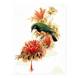 Tropical Splendor Postcard