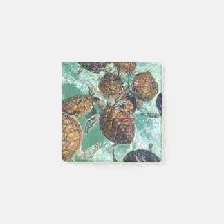 Tropical Turtles (Kimberly Turnbull Photography) Post-it Notes