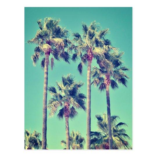 Tropical Vintage Palm Trees Postcard