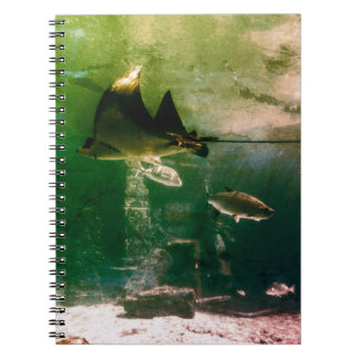 Tropical Water Notebooks