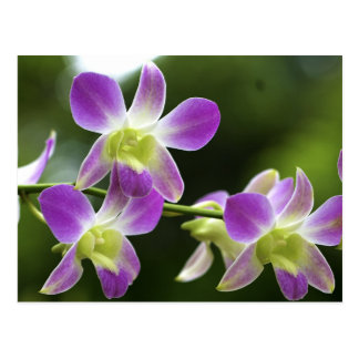 Trorpical Orchids Bloom Postcard