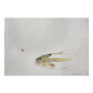 Trout chasing a fisherman's fly poster