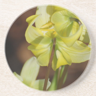 Trout Lily Beverage Coasters