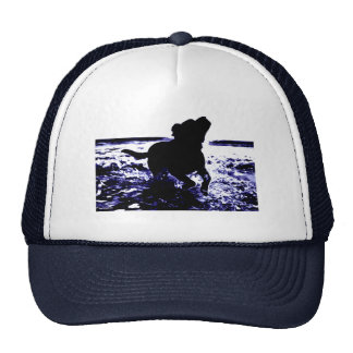 Trucker hat black lab playing in water