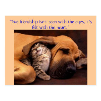 """True friendship ... Postcard"