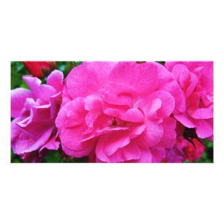 True Rose Photocard Photo Card