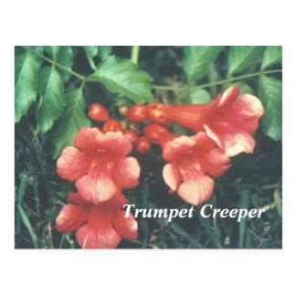 Trumpet creeper postcard