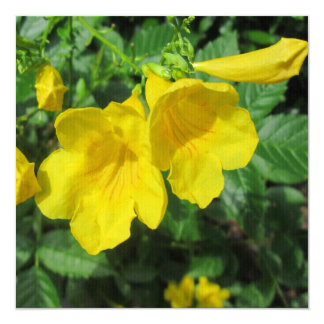 Trumpet Garden Flower Yellow Personalized Announcement