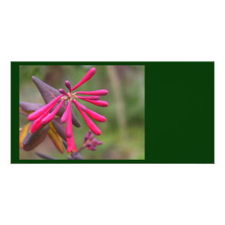 Trumpet Honeysuckle Buds of Coral Woodbine Personalized Photo Card