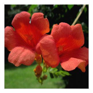 Trumpet Orange Sunlit Personalized Invites