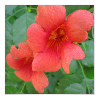 """Trumpet Vine Orange 5.25"""" Square Invitation Card"""