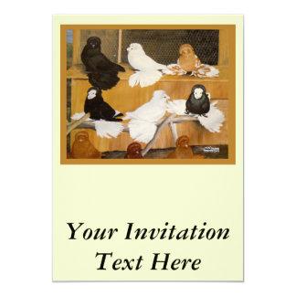 Trumpeter Pigeon Champions 13 Cm X 18 Cm Invitation Card