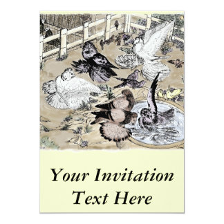 Trumpeter Pigeon Group Watercolor 13 Cm X 18 Cm Invitation Card