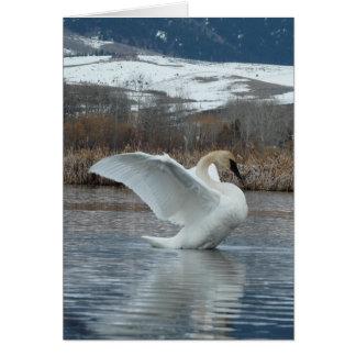 Trumpeter Swan 2 Card