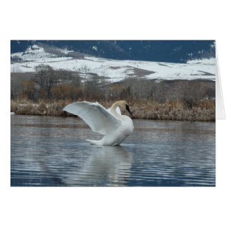 Trumpeter Swan 2 Greeting Card