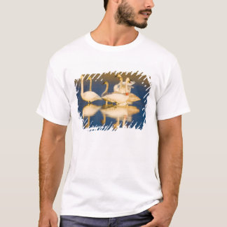 Trumpeter swan family in last light at pond at 2 T-Shirt