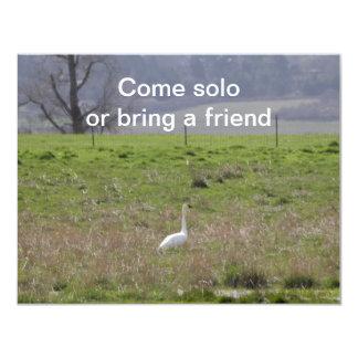 Trumpeter Swan San Juan Island Birthday Sympathy 11 Cm X 14 Cm Invitation Card