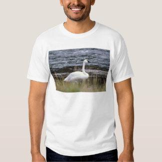 Trumpeter Swan Shirts