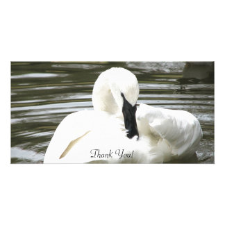 Trumpeter Swan, Zoo Resident Customised Photo Card
