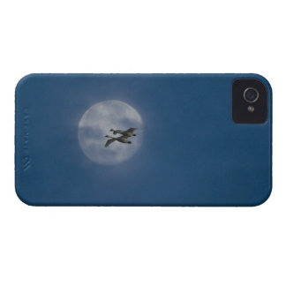 Trumpeter Swans (Cygnus buccinator) over winter iPhone 4 Cases