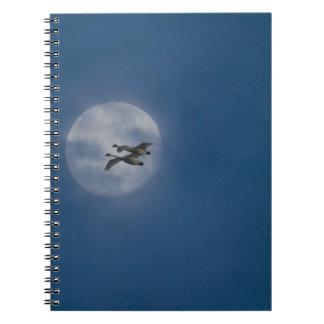 Trumpeter Swans (Cygnus buccinator) over winter Notebooks