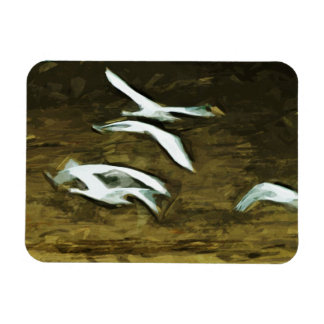 Trumpeter Swans in Flight Abstract Impressionism Rectangular Photo Magnet