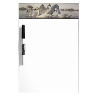 Trumpeter Swans in the Madison River in winter Dry Erase Board