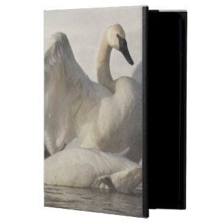 Trumpeter Swans in the Madison River in winter iPad Air Cover