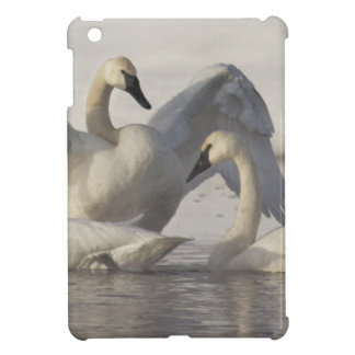 Trumpeter Swans in the Madison River in winter iPad Mini Cases