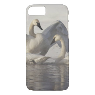 Trumpeter Swans in the Madison River in winter iPhone 8/7 Case