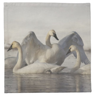 Trumpeter Swans in the Madison River in winter Napkin