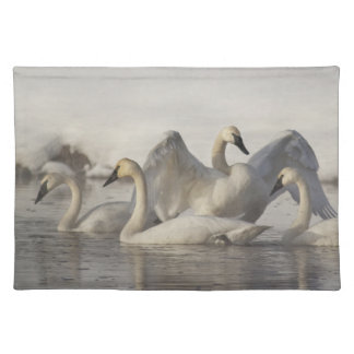 Trumpeter Swans in the Madison River in winter Placemat