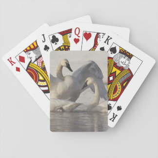 Trumpeter Swans in the Madison River in winter Poker Cards