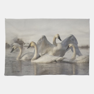 Trumpeter Swans in the Madison River in winter Tea Towel