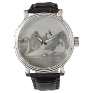 Trumpeter Swans in the Madison River in winter Wrist Watch